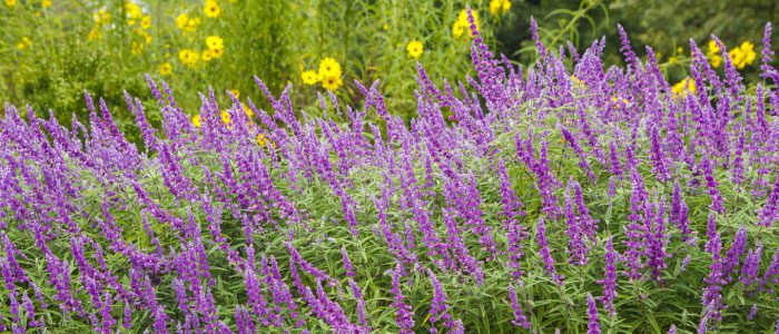 A native plant lover's don't-miss conference