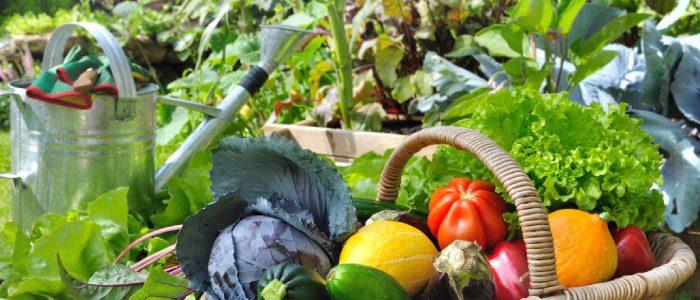 Vegetable Troubleshooting Workshop prepares you for spring
