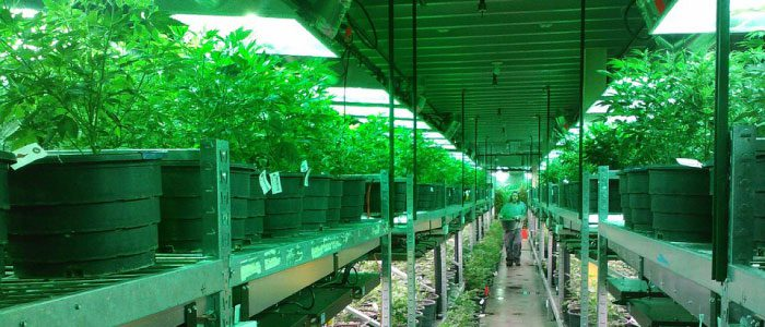Can you qualify for a mortgage if you are an employee  in the marijuana industry?