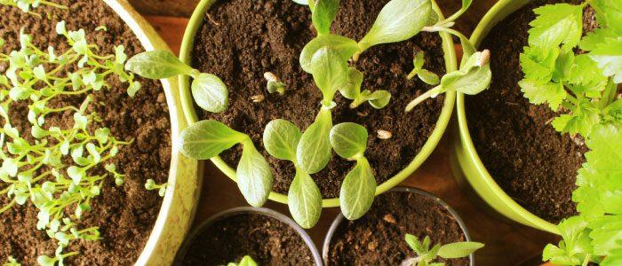 Plant sales abound