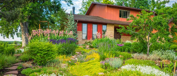Xeriscape series launches March 6
