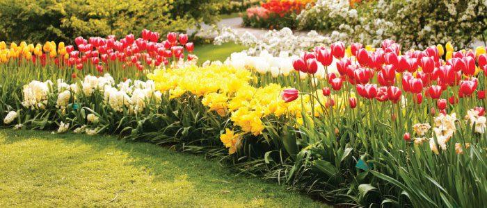 local garden tours