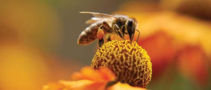 June is Colorado Pollinator Month