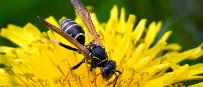 Warm weather brings out the wasps
