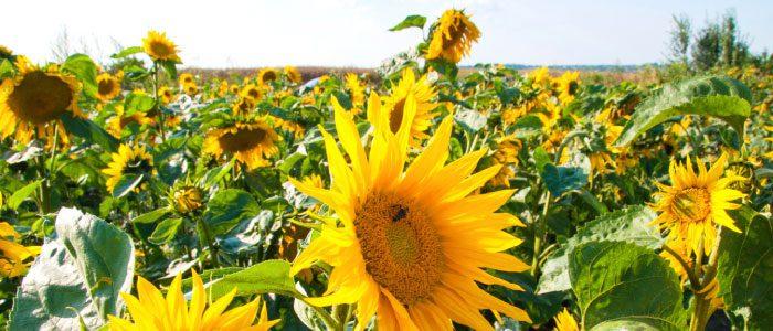 Buzz about the Colorado Pollinator Highway