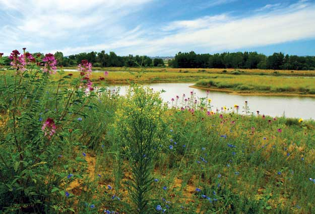 Barefoot Lakes in Firestone: Live in the Haven That Nature Calls Home