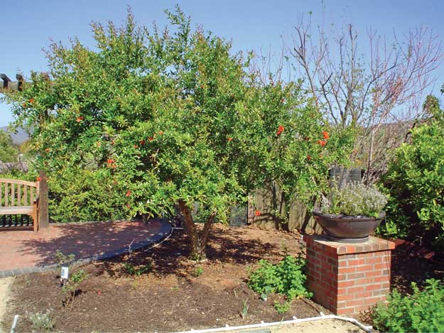 YardSmart: Late summer fruit tree care