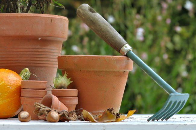 CSU Extension: Perennial fall chores