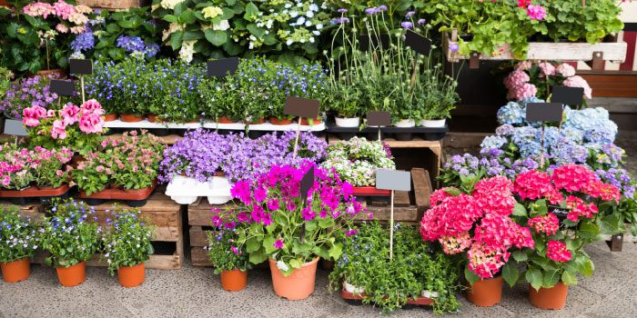 Plant Sales Abound in Colorado