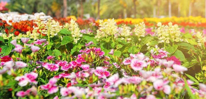Garden Tours