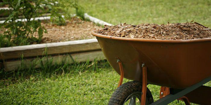Vegetable Gardening During Drought