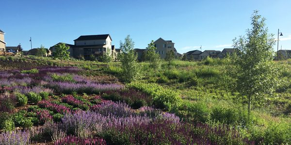 Live Where You Play: Barefoot Lakes' New Park, New Homes Bring Nature to Your Front Door