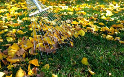 Ask Angie's List: How Should I Prepare My Lawn for Fall?