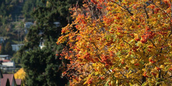 Colorado Garden – Fall Color