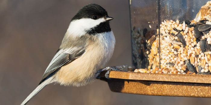 The Right Feeder for Every Bird